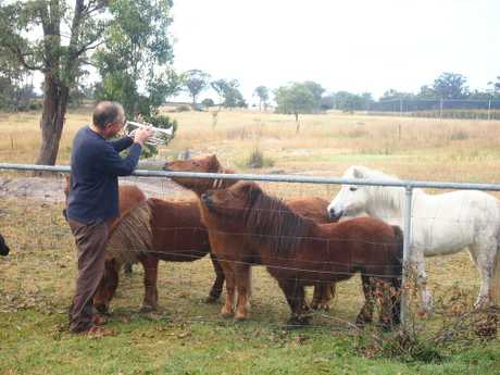 Robert Channon of Robert Channon Wines at Stanthorpe teaches some of his miniature horses to play the trumpet, ahead of the annual Brass and Wine Day this Saturday.
