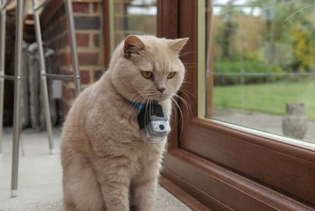 The Secret Life of the Cat: BBC's Horizon programme finds out what household cats really get up to after dark.
