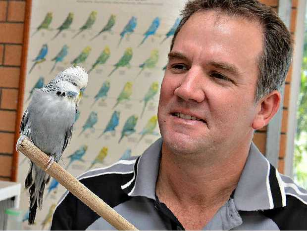 Mackay man Michael Pace has won the opaline class of the Australian National Budgerigar Championships with a bird that took four years of tireless effort to produce.