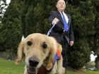 Guide Dogs leads the way for most trusted charities