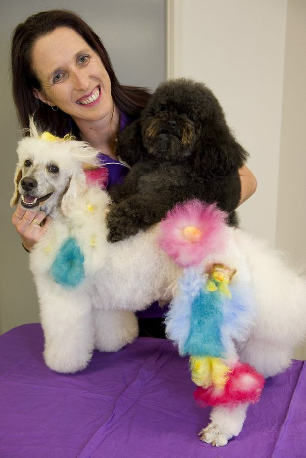 Taryn Binstead of Canine Creation will head to Sydney to compete in Groomquest 2013. She will enter Pablo in the creative grooming section, while Sooty will be in the freestyle grooming section.