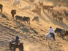 Droving: the romance and the reality