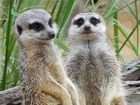 Exotic breeds could come to Queensland zoos soon