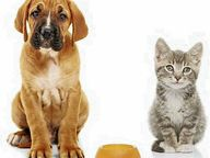 Reader writes many people fleeing DV have to leave beloved pets behind which are then either neglected, maimed or killed as payback.