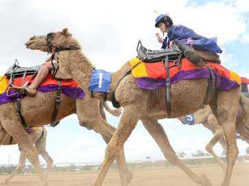 The Gympie Camel Cup for Melbourne Cup at the Gympie Turf Club.