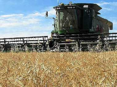 HEADING OUT: Blanch Farming, Clifton, will harvest about 5000ha of grain crop this season.