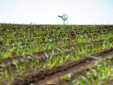 CROP: Paul McIntosh is advising some soil checks ahead of summer crop planting.