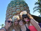 THE Big Pineapple Music Festival will be back for a third year, moving across the road but still in sight of its namesake tourist attraction.