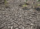 Farmers too devastated to take advantage of drought funding