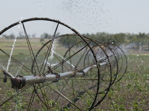 Irrigation in a paddock near Kingsthorpe, Saturday, January 04, 2014. Photo Kevin Farmer / The Chronicle