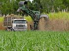 STRAINS on Mackay's sugar industry continue as farmers prepare to harvest a cane crop that could be down 12% from last year.