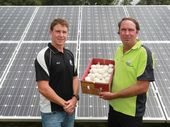 SJW Mushrooms owner Steven Willemse has invested more than $100,000 in a solar system that will drastically improve his operations, save him money and give him guaranteed peace of mind.