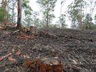 Milne loses bid for logging info