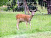 AFTER suspecting that deer were being killed on his land just outside of Middlemount in early August, one concerned property owner called the police.
