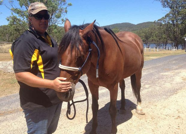 COMPLAINT MADE: Horses appear to be in good condition in the Cherrabah stables, rather than mistreated.