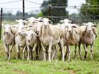 THE Bureau of Meteorology is warning sheep farmers of the risks severe frosts could have on their flock.