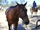 MORE than half of Australian horse riders have had an accident or close call while riding along roads.