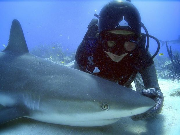 Madison Stewart with a Caribbean reef shark in 'tonic immobility' in Shark Girl.