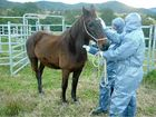 NSW Department of Primary Industries (DPI) has confirmed Hendra virus as the cause of death of a horse near Murwillumbah on the NSW north coast.