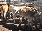 VET and cattleman Dr Peter Kerkenezov believes the live cattle trade is detrimental to Australlia.