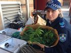 Toowoomba police officer Sergeant Kate Teasdale inspects marijuana, chemicals and a generator seized from a Goombungee home.