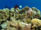 Experts support Obama on reef worry