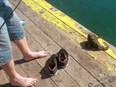 BE CAREFUL: A Stonefish caught off Bongaree Jetty.