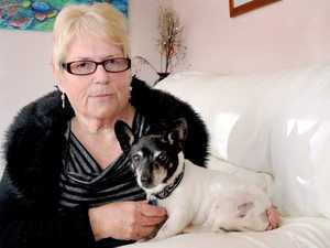 Maryborough's Shirley Robinson is shocked at the injuries suffered by her dog and companion, Buddy.