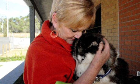 Friends of RSPCA president Judy Whicker gives the emaciated husky some tender loving care.