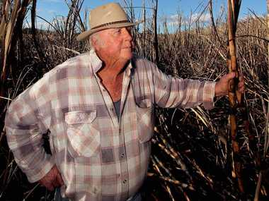 Cane farmer John 'Stevo' Stevens in one of the patches of cane believed to have been deliberately lit.