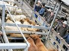 ADVERSE weather and low food and water supplies have been blamed for a drop in sales at the Northern Rivers Livestock Exchange last financial year.