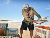 COMMERCIAL fishing activity in the Sandy Strait and Fraser Island waters will increase during the annual sea mullet run.