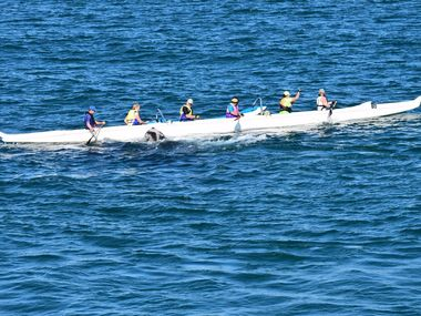 Whale meets paddlers at Ballina's North Wall.