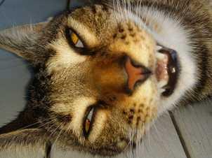 Mark N Racheal HIlls - I love my pet because he looks funny when he's sleeping.
