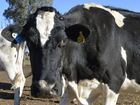 BRW rich-lister and retailer Gerry Harvey will become the latest billionaire to invest heavily in dairy farming.