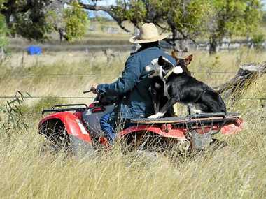 UNSAFE: On most cattle properties a helmet is an Akubra, according to Acting Sgt Craig McConnel.