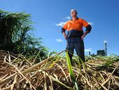 """NUMEROUS """"crop circles"""" in the sugar cane fields of Condong have set tongues wagging in recent days."""