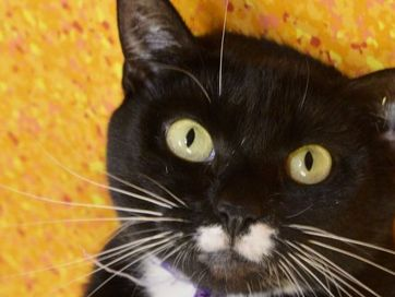 RSPCA needs to find homes for their furry friends as some of them reach over 200 days.