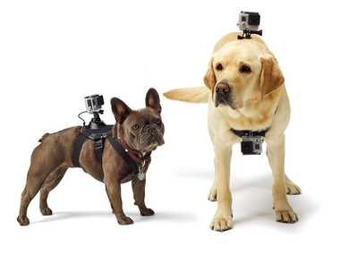 The GoPro Fetch dog harness.