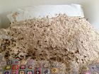 PEST controller called in to deal with nest of 5000 wasps covering woman's bed