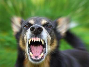 Homes with 'regulated' dogs will face Sunshine Coast Council inspection.