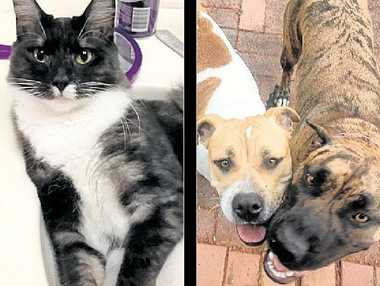 """ADORABLE: Alicia Hughes' adopted cat Antonio (left). BEST FRIENDS: Annmaree Theresa Harris adopted her dog Emmy after """"falling in love"""" with the foster animal (centre). SISTERS: Jo Scott adopted two cats from the same litter."""