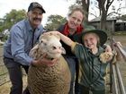 Geham State School student Zara Ryan pats a sheep from the Sovereign Poll Dorsets stud with mum Patina Ryan and Chris Rubie of Sovereign Poll Dorsets.