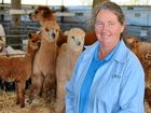 SHE started adult life with a major in mathematics, so it's not surprising Margaret Hassall has done the figures on alpaca production.