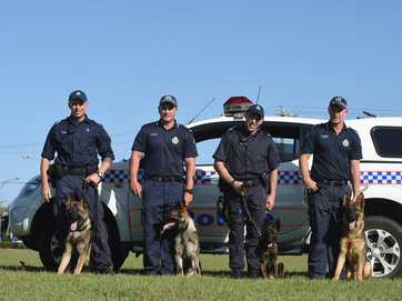 Four recruit dogs have taken up residence in the backyards of local police families and are in training to be all-round police dogs.