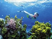 THE Great Barrier Reef is a national and global icon but it's become apparent that this vast array of marine ecosystems is in trouble.