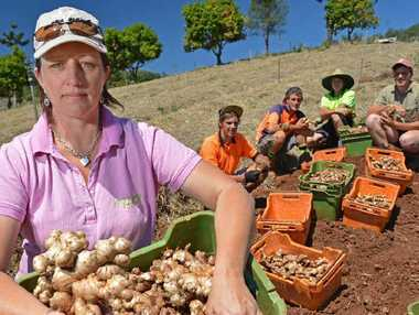 NOT HAPPY: Langshaw farmer Jo Garrett fears the Australian Government agreement to import ginger from Fiji could jeopardise biosecurity and local jobs. Pictured back are Jerry Creek Ginger workers Tristan Dawes, Dylan Sheib, Ben Bird and Scott Gear.