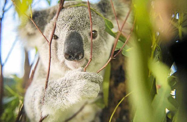 speed test koala
