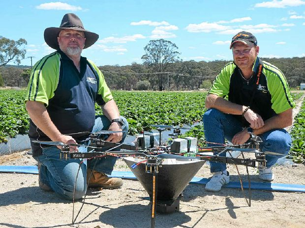 PEST MANAGEMENT: Nathan Roy and Glenn Bennett trial the Aerobug hexacopter at Strawberry Fields in Stanthorpe.