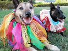 DOG'S LIFE ... OF PARTY: Mofo and Kali get ready for Saturday's Federal Park Party Dog Show.